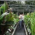 Customers in nursery green house