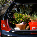 Transporting plants in a station wagon photo