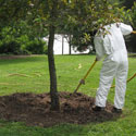Using an air tiller to aerate soil around tree