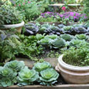 A vegetable and herb garden in containers and raised beds