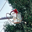 Utility worker cutting down branches
