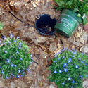 Example of pot-in-pot planting from Rick Brown