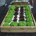 floating hydroponic garden