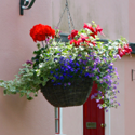 colorful flowers in a hanging basket