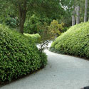 Rounded hedges with curving pathway