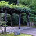 Arbor covered in vines in Japanese garden