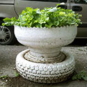 A tire planter painted white