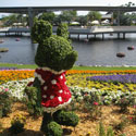 Topiary in form of Minnie Mouse at Epcot's Flower and Garden Festival