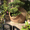 A large terra cotta pot with green plant