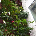 Wall of building covered in tropical looking plants