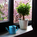 Potted plant on windowsill