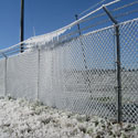 UF/IFAS orchard iced down to protect