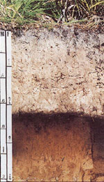 A cross-section of Florida soil