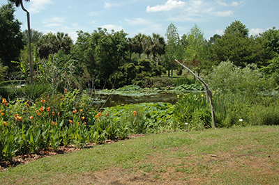 A pond with a naturalized shoreline in Kanapaha Gardens