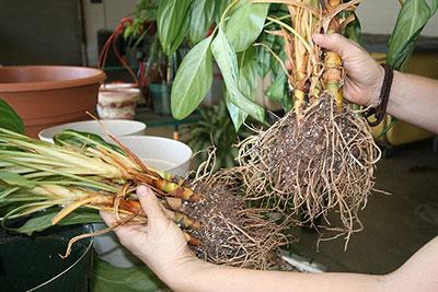 Creating New Plants Propagation Gardening Solutions