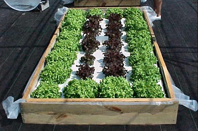 A Floating Hydroponic Garden In A Constructed Wooden Frame