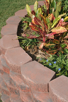 A raised ornamental bed made with decorative bricks and filled with colorful coleus.