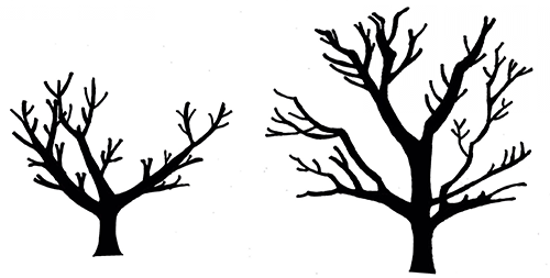 Illustration of two leafless trees to show the pruning structures
