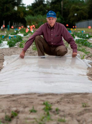Man putting plastic down to solarize the soil.