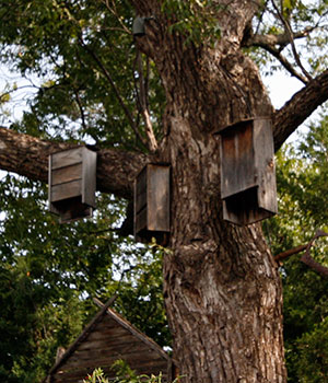 wooden bat houses