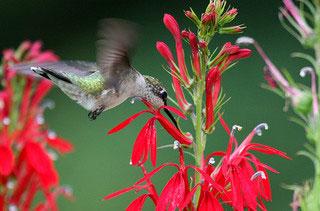 Also On Gardening Solutions. Hummingbird Feeders