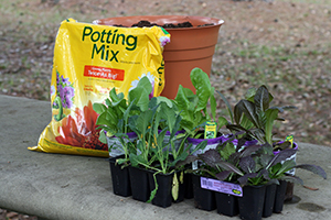 Potting mix, pot, and plants
