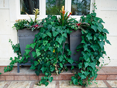 A planter filled with cascading ivy and a few colorful tropical plants, below a three paned window