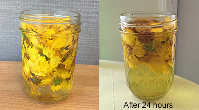 two photos of glass jar with water and yellow flowers in it, second photo has text reading after 24 hours and the water is now yellow and flowers have condensed in size