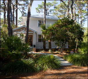A shady Florida-Friendly landscape with plenty of pine trees