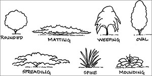 Line drawing of different plant forms