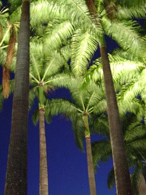 Palms uplit