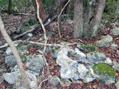 A rocky yet wooded area; photo courtesy of Kim Gabel, UF/IFAS Extension Monroe County