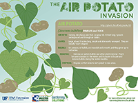 Air potato graphic
