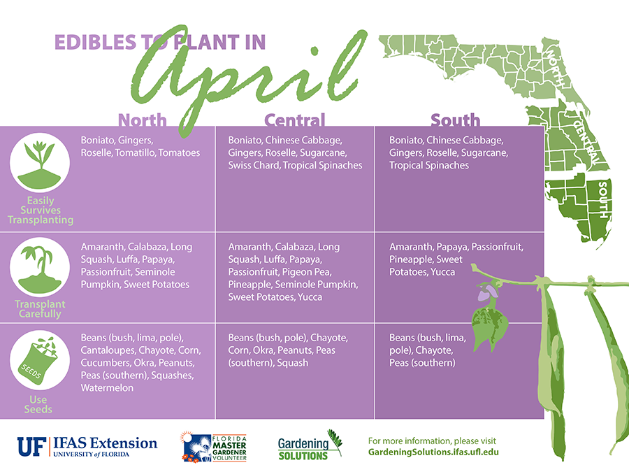 Edibles to plant this month gardening solutions - Vegetable garden what to plant in april ...