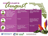 A graphic showing vegetables to plant in August for Florida