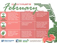 A graphic showing vegetables to plant in February for Florida