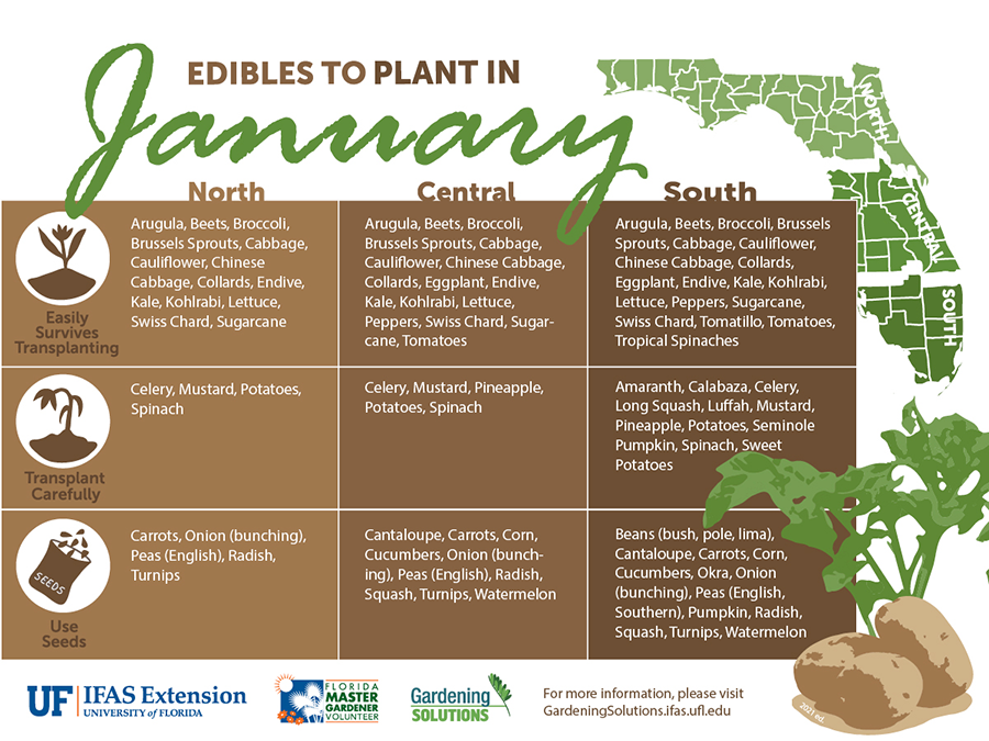 Graphic listing vegetables to plant in January for Florida, see Gardening Calendar publications linked below for text versions.