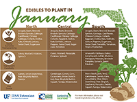 A graphic showing edibles to plant in January for Florida