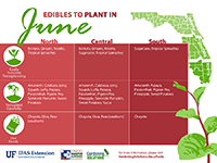 A graphic showing vegetables that can be planted in June for Florida