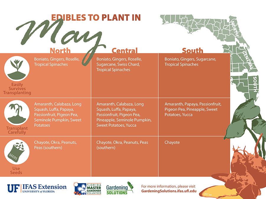 Graphic listing vegetables to plant in May for Florida, see Gardening Calendar publications linked below for text versions.