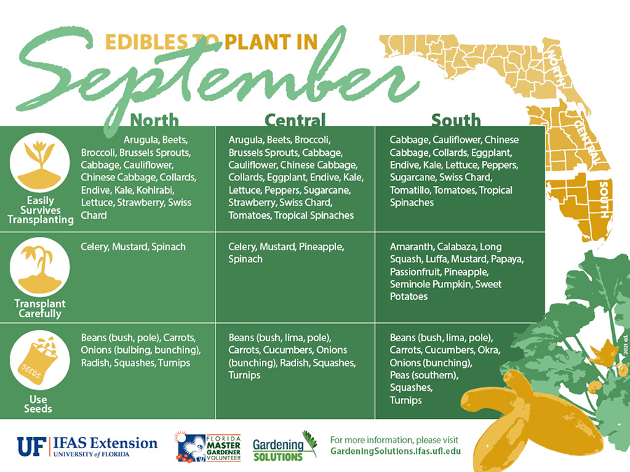 Graphic listing fruits and vegetables to plant in September for Florida, see Gardening Calendar publications linked below for text versions.