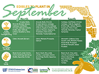 A graphic showing vegetables to plant in September for Florida