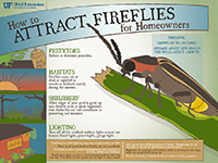 A graphic showing tips for attracting fireflies