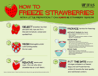A thumb size version of a graphic with step by step instructions on freezing strawberries