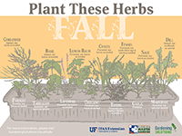 A graphic showing herbs to plant in fall