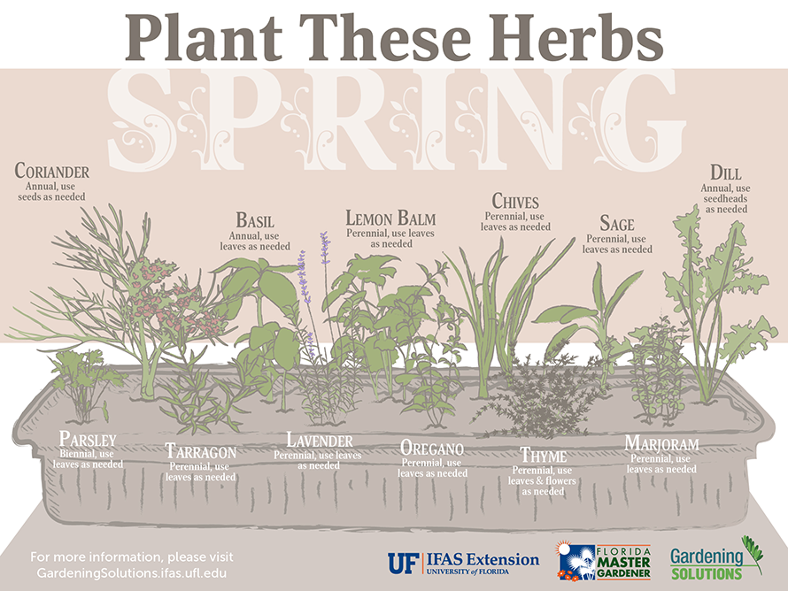 Herbs to plant in spring: coriander, basil, lemon balm, parsley, tarragon, lavender, oregano, thyme, chives, sage, majoram, and dill