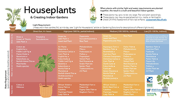 A color table listing suggested houseplants group by light needs
