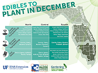 Edibles to Plant in December graphic