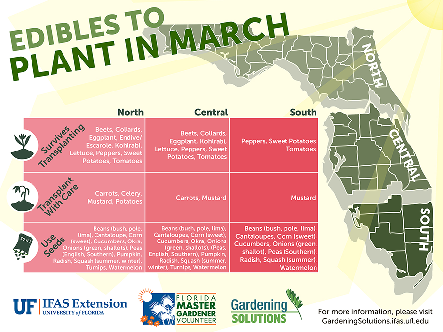 Graphic listing fruits and vegetables to plant in March for Florida, see Gardening Calendar publications linked below for text versions.