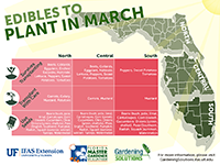 Edibles to plant in March graphic